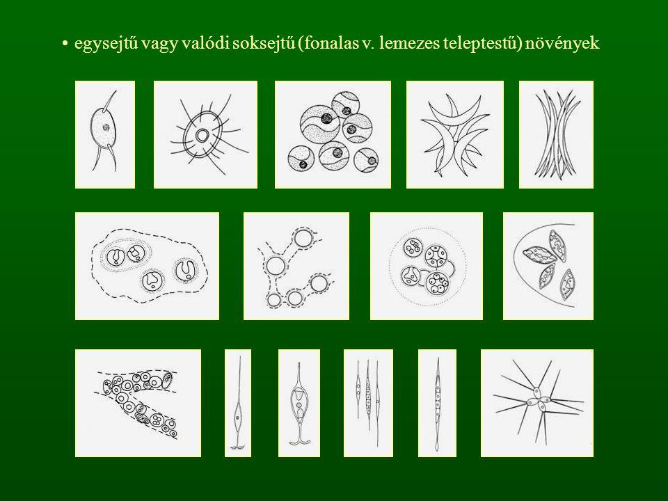 egysejtű vagy valódi soksejtű (fonalas v. lemezes teleptestű) növények