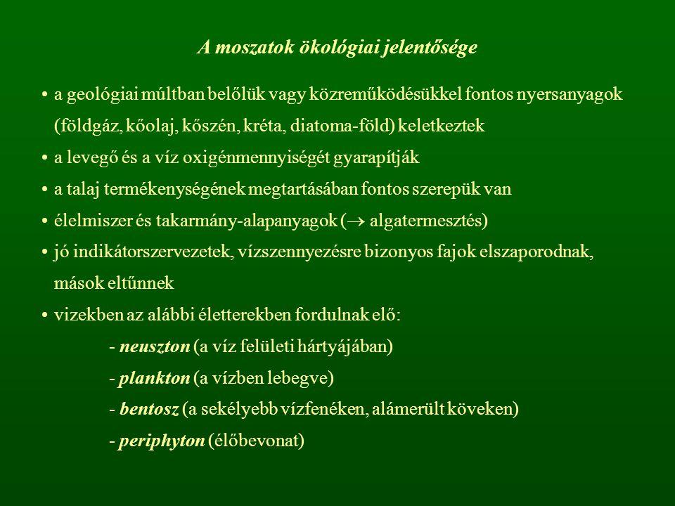A moszatok ökológiai jelentősége a geológiai múltban belőlük vagy közreműködésükkel fontos nyersanyagok (földgáz, kőolaj, kőszén, kréta, diatoma-föld)