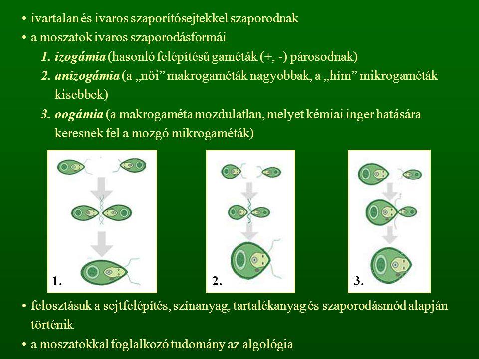 ivartalan és ivaros szaporítósejtekkel szaporodnak a moszatok ivaros szaporodásformái 1.izogámia (hasonló felépítésű gaméták (+, -) párosodnak) 2.aniz