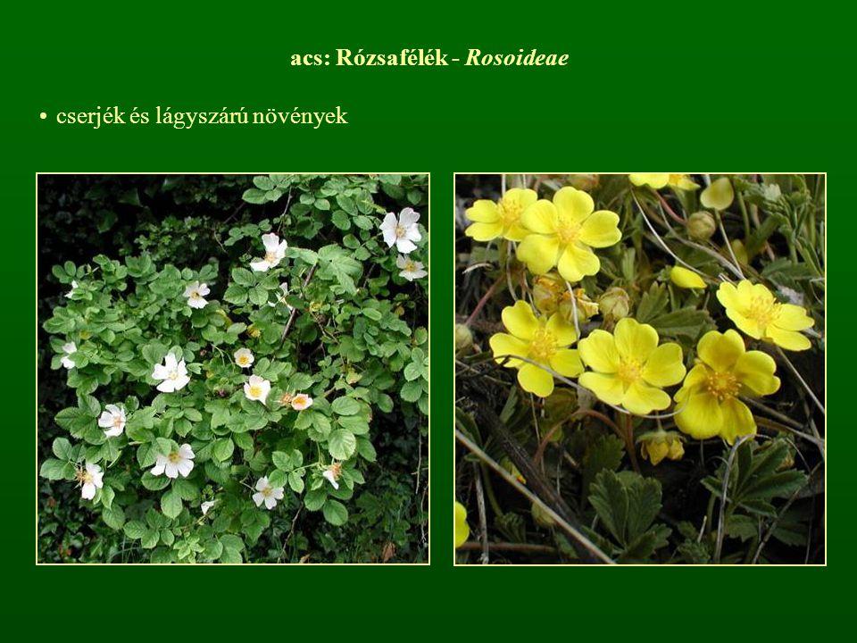 acs: Rózsafélék - Rosoideae cserjék és lágyszárú növények