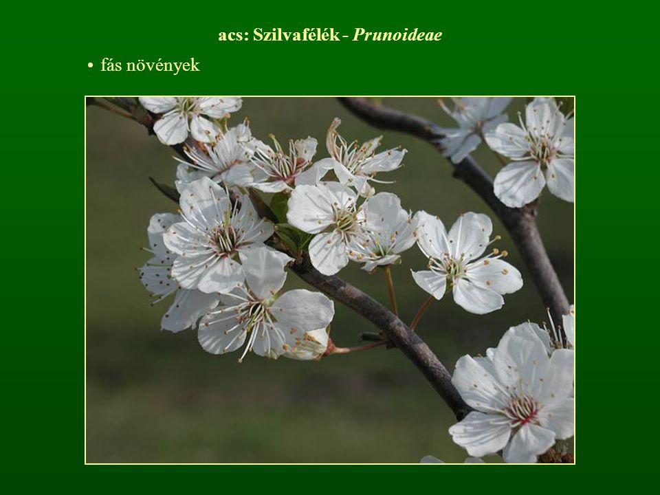 acs: Szilvafélék - Prunoideae fás növények