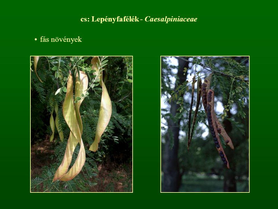 cs: Lepényfafélék - Caesalpiniaceae fás növények