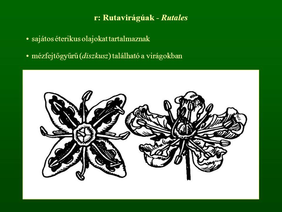 r: Rutavirágúak - Rutales sajátos éterikus olajokat tartalmaznak mézfejtőgyűrű (diszkusz) található a virágokban