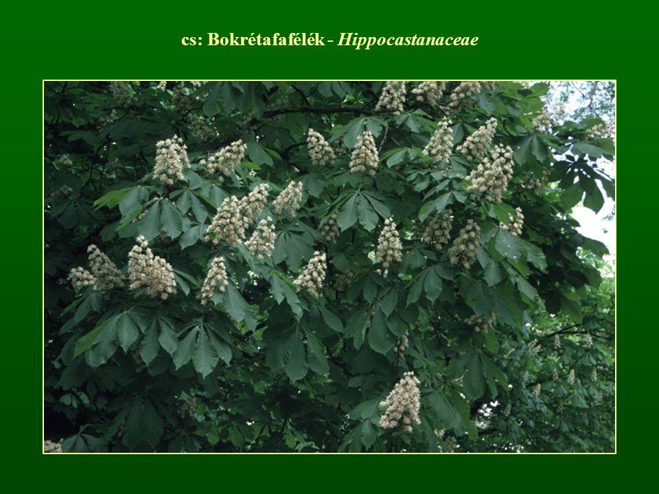 cs: Bokrétafafélék - Hippocastanaceae