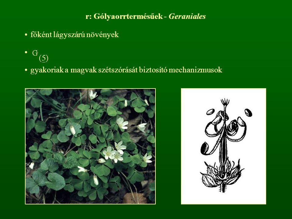r: Gólyaorrtermésűek - Geraniales főként lágyszárú növények gyakoriak a magvak szétszórását biztosító mechanizmusok