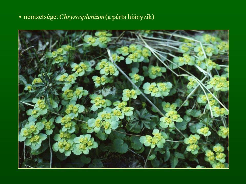 cs: Juharfafélék - Aceraceae