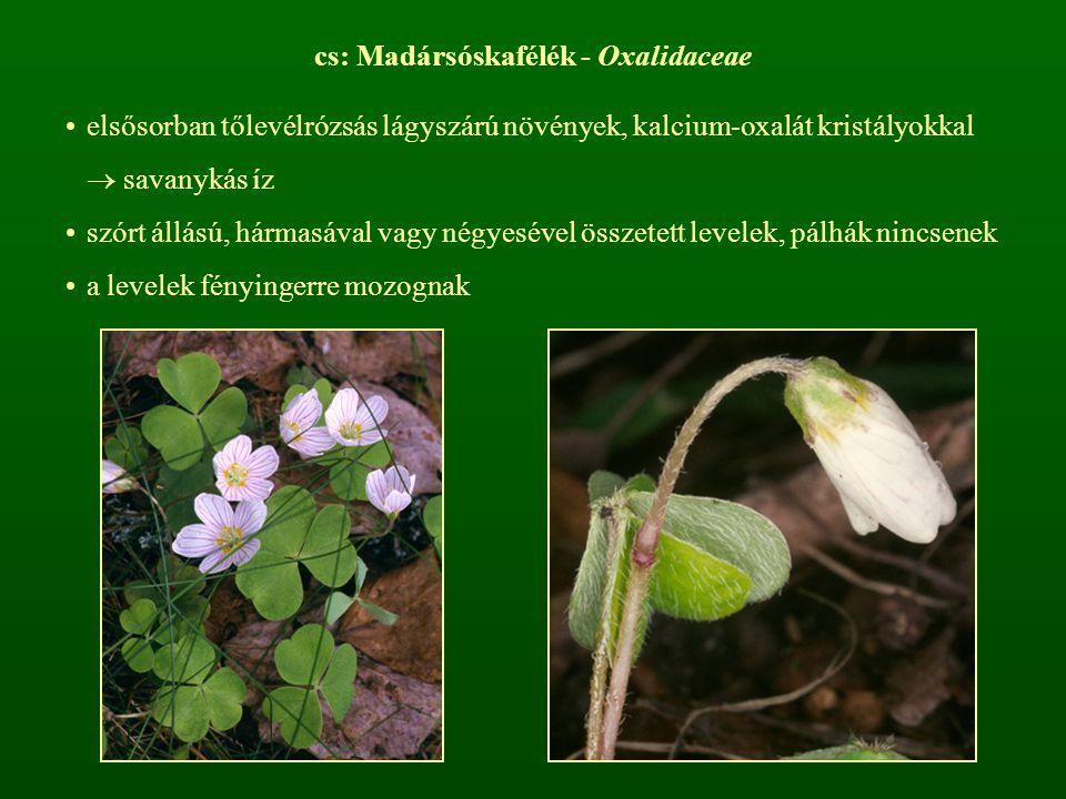 cs: Madársóskafélék - Oxalidaceae elsősorban tőlevélrózsás lágyszárú növények, kalcium-oxalát kristályokkal  savanykás íz szórt állású, hármasával va