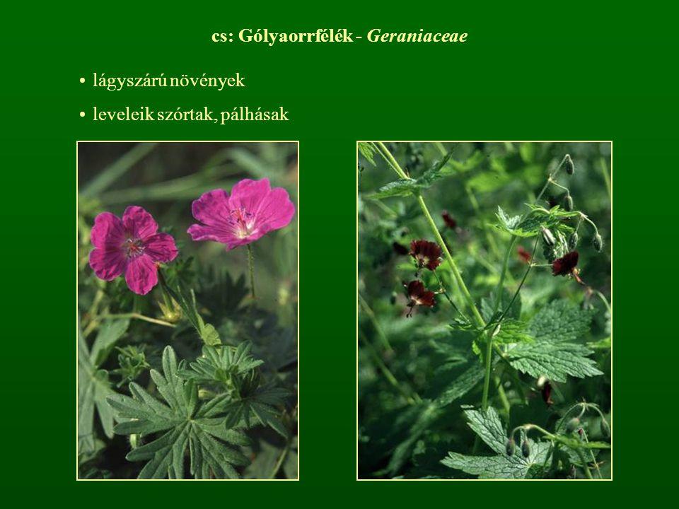 cs: Gólyaorrfélék - Geraniaceae lágyszárú növények leveleik szórtak, pálhásak