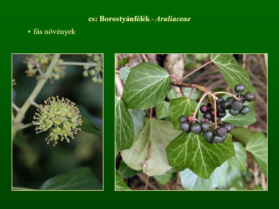 cs: Borostyánfélék - Araliaceae fás növények