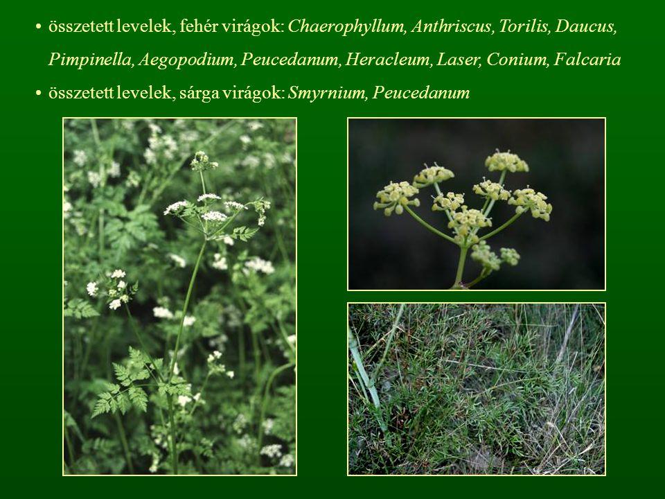 összetett levelek, fehér virágok: Chaerophyllum, Anthriscus, Torilis, Daucus, Pimpinella, Aegopodium, Peucedanum, Heracleum, Laser, Conium, Falcaria ö