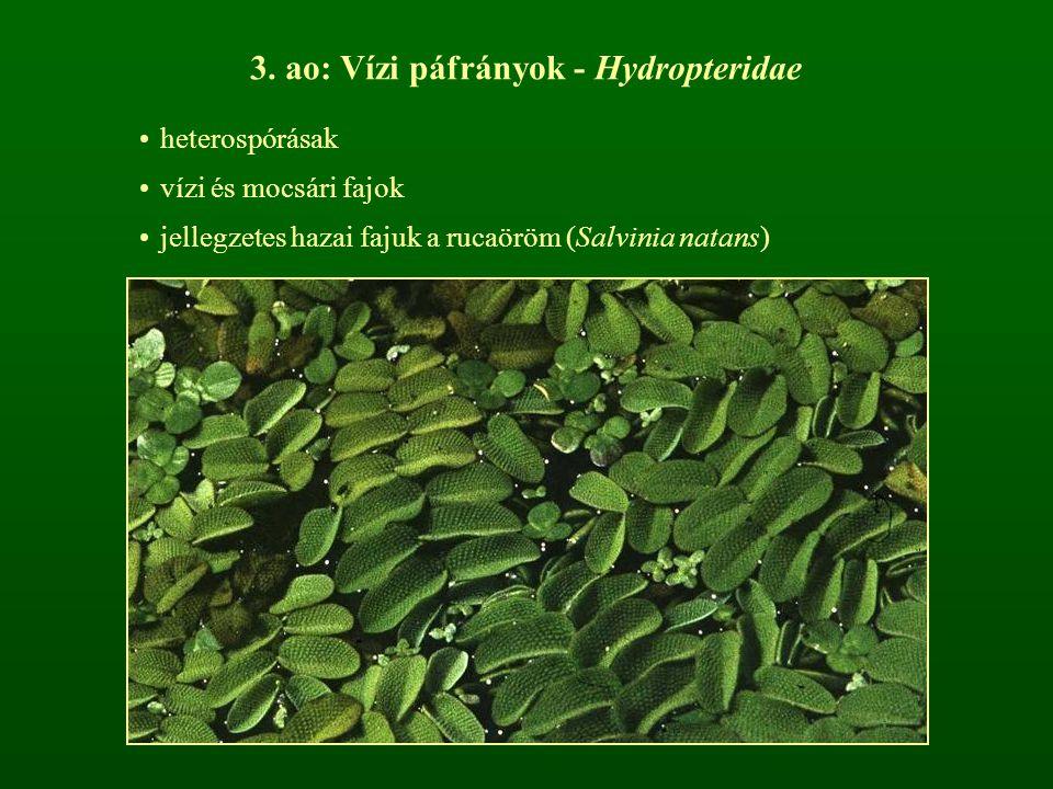 Magvas növények - Spermatophyta