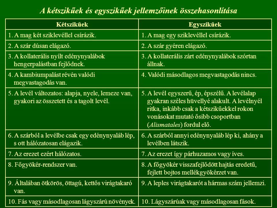 A kétszikűek és egyszikűek jellemzőinek összehasonlítása KétszikűekEgyszikűek 1.