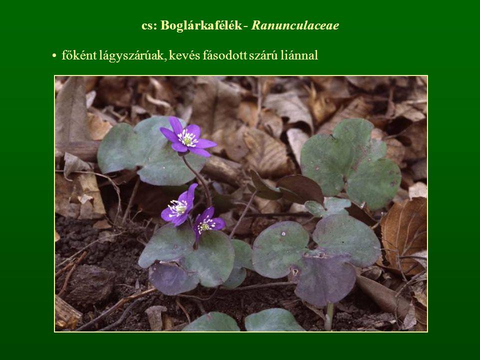 cs: Boglárkafélék - Ranunculaceae főként lágyszárúak, kevés fásodott szárú liánnal