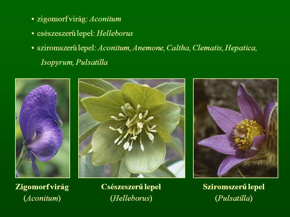 zigomorf virág: Aconitum csészeszerű lepel: Helleborus sziromszerű lepel: Aconitum, Anemone, Caltha, Clematis, Hepatica, Isopyrum, Pulsatilla Zigomorf virág (Aconitum) Csészeszerű lepel (Helleborus) Sziromszerű lepel (Pulsatilla)