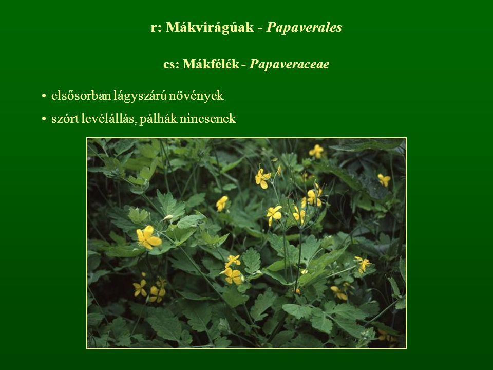 r: Mákvirágúak - Papaverales cs: Mákfélék - Papaveraceae elsősorban lágyszárú növények szórt levélállás, pálhák nincsenek