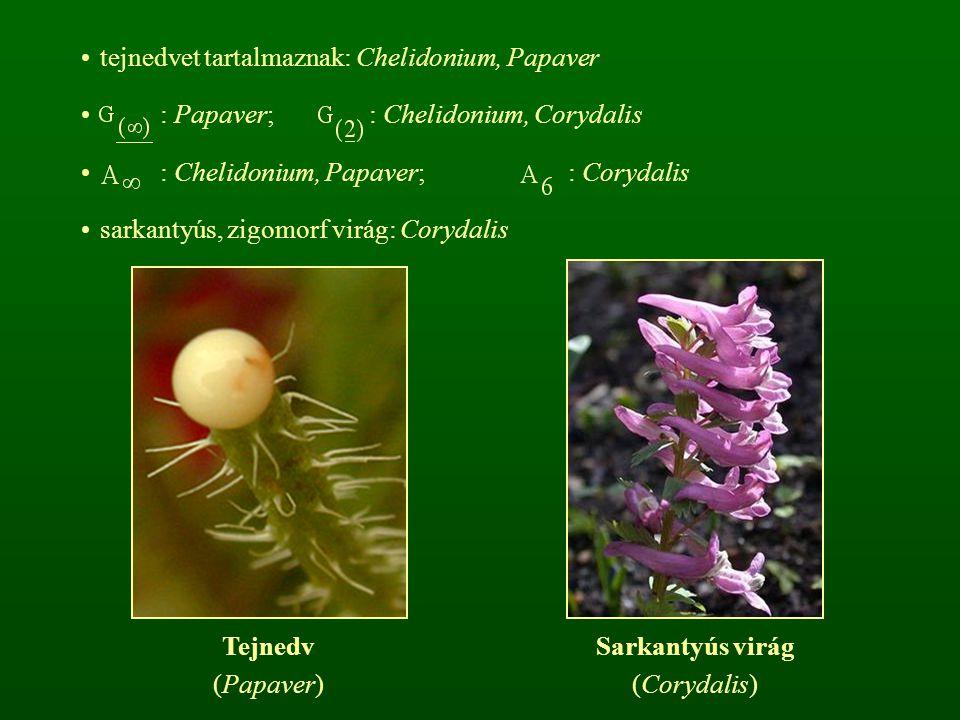tejnedvet tartalmaznak: Chelidonium, Papaver : Papaver; : Chelidonium, Corydalis : Chelidonium, Papaver; : Corydalis sarkantyús, zigomorf virág: Corydalis Tejnedv (Papaver) Sarkantyús virág (Corydalis)
