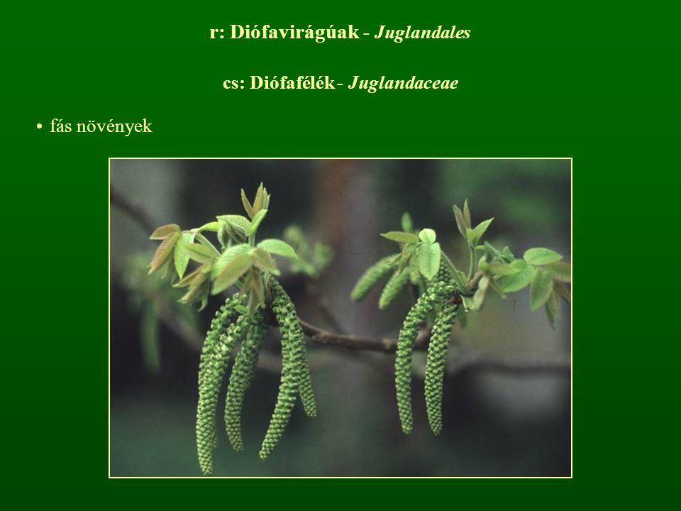 r: Diófavirágúak - Juglandales cs: Diófafélék - Juglandaceae fás növények