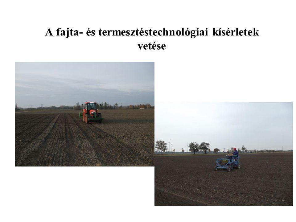 A fajta- és termesztéstechnológiai kísérletek vetése