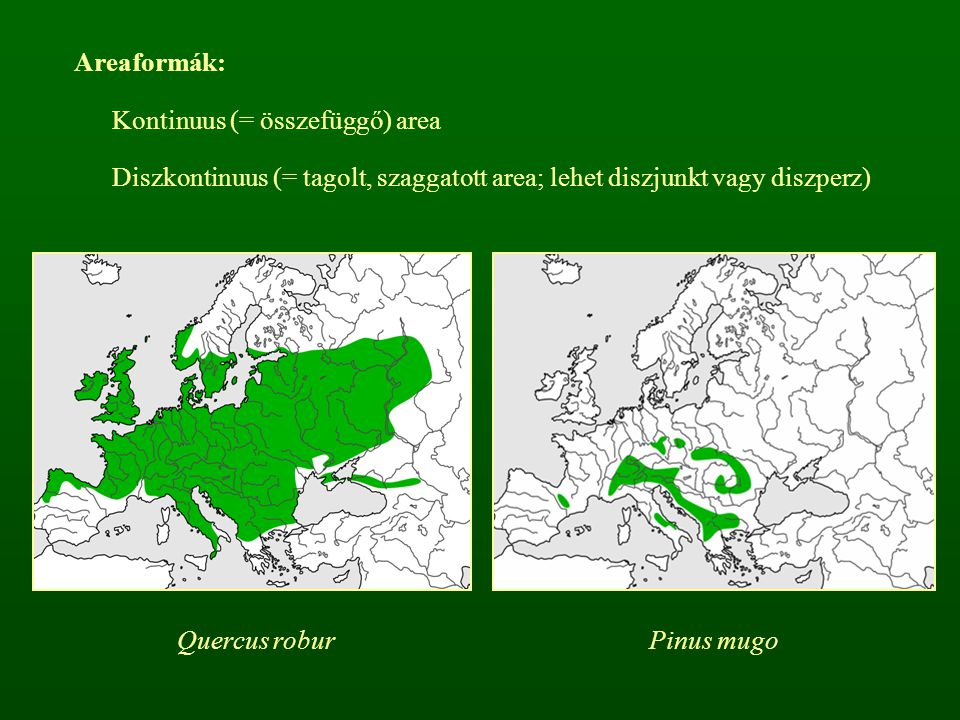 hipogeikus (talajban fejlődő) termőteste van a szarvasgombáknak (Tuberales), melyek erdei fafajokkal élnek szimbiózisban  mikorrhiza Nyári szarvasgomba – Tuber aestivum