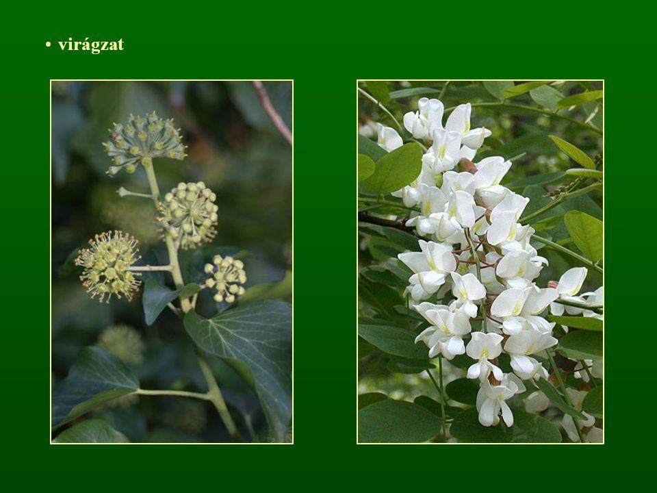 virágzat