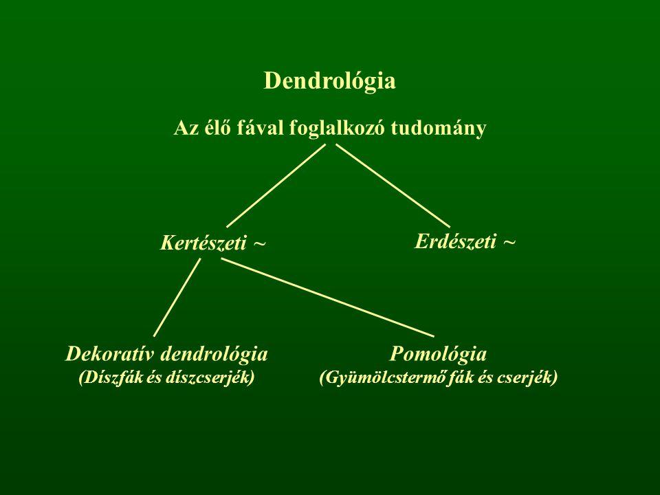 Dendrológia Az élő fával foglalkozó tudomány Kertészeti ~ Erdészeti ~ Dekoratív dendrológia (Díszfák és díszcserjék) Pomológia (Gyümölcstermő fák és c