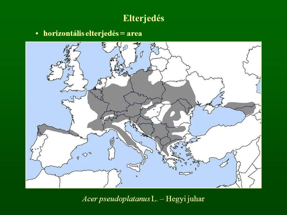 Elterjedés horizontális elterjedés = area Acer pseudoplatanus L. – Hegyi juhar