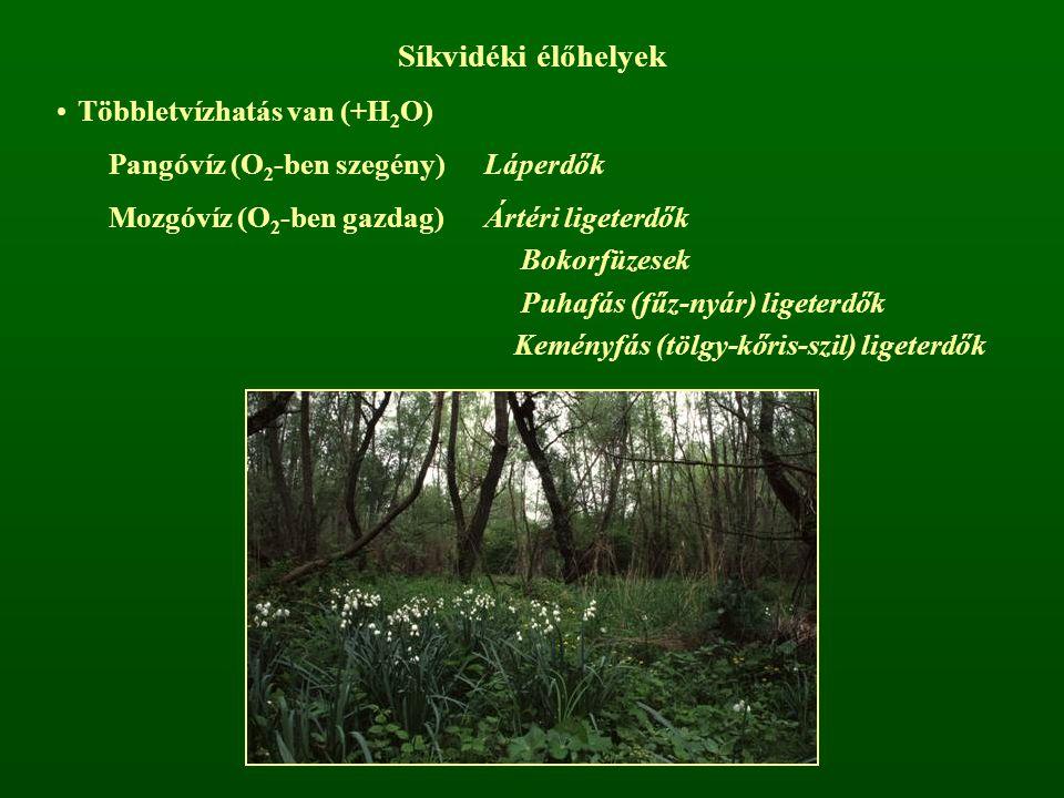 Síkvidéki élőhelyek Többletvízhatás van (+H 2 O) Pangóvíz (O 2 -ben szegény)Láperdők Mozgóvíz (O 2 -ben gazdag)Ártéri ligeterdők Bokorfüzesek Puhafás