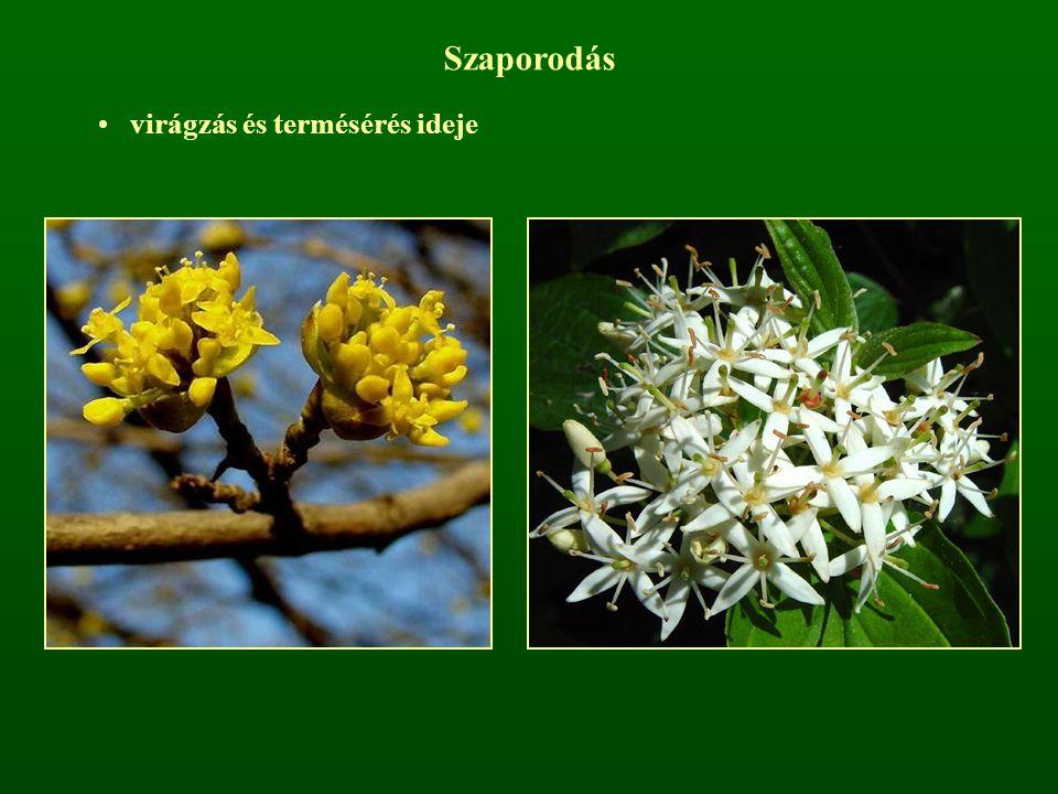 Szaporodás virágzás és termésérés ideje