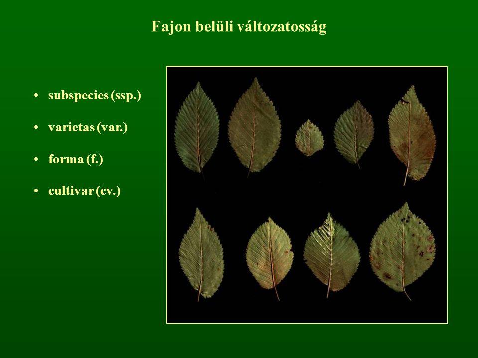 Fajon belüli változatosság subspecies (ssp.) varietas (var.) forma (f.) cultivar (cv.)