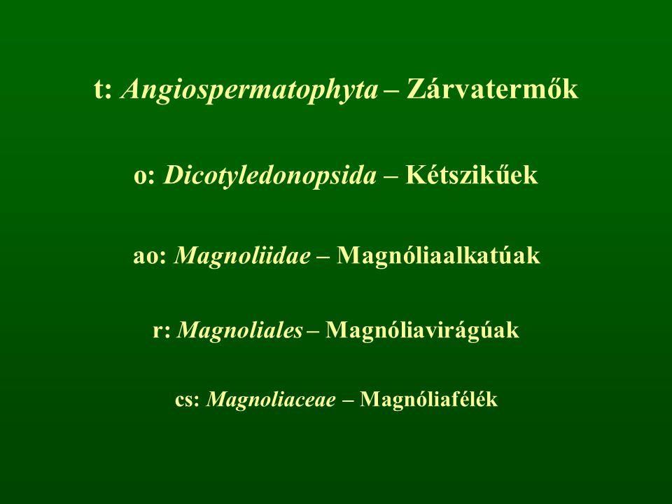 t: Angiospermatophyta – Zárvatermők o: Dicotyledonopsida – Kétszikűek ao: Magnoliidae – Magnóliaalkatúak r: Magnoliales – Magnóliavirágúak cs: Magnoli
