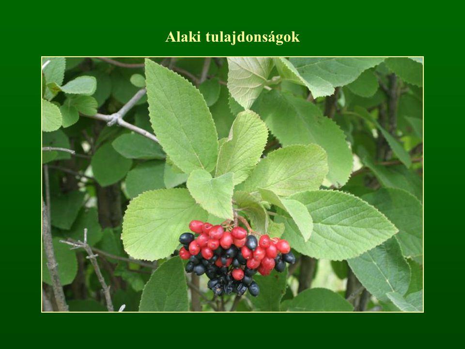 t: Angiospermatophyta – Zárvatermők o: Dicotyledonopsida – Kétszikűek ao: Magnoliidae – Magnóliaalkatúak r: Magnoliales – Magnóliavirágúak cs: Magnoliaceae – Magnóliafélék