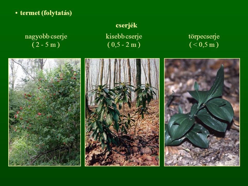 Gyorsan vagy lassan növő fajok Növekedés
