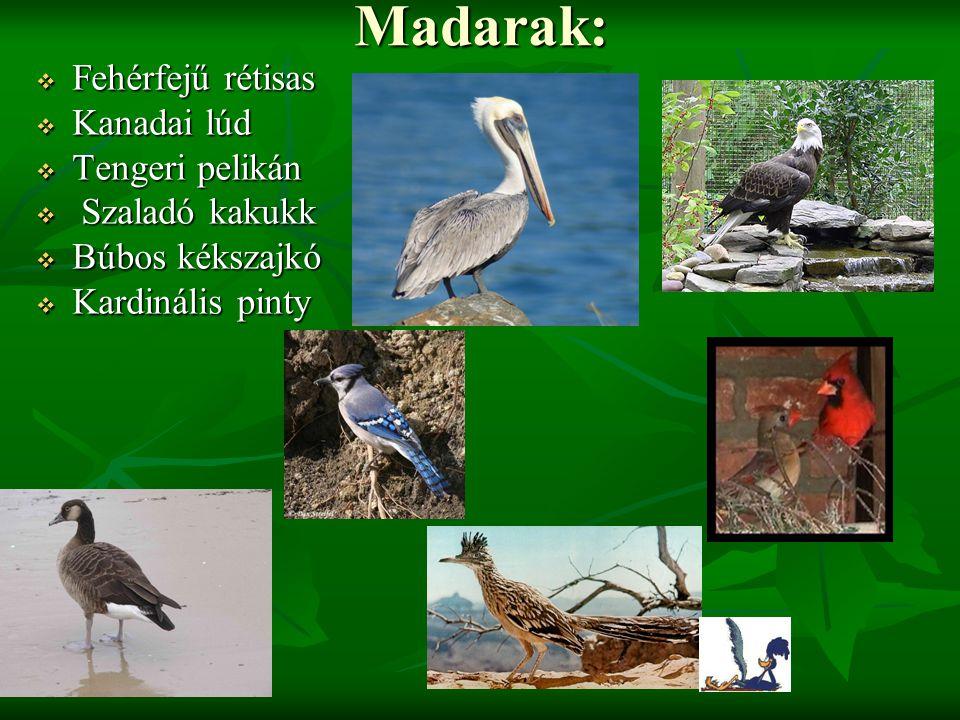 Madarak:  Fehérfejű rétisas  Kanadai lúd  Tengeri pelikán  Szaladó kakukk  Búbos kékszajkó  Kardinális pinty
