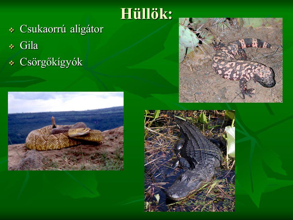 Hüllök:  Csukaorrú aligátor  Gila  Csörgőkígyók