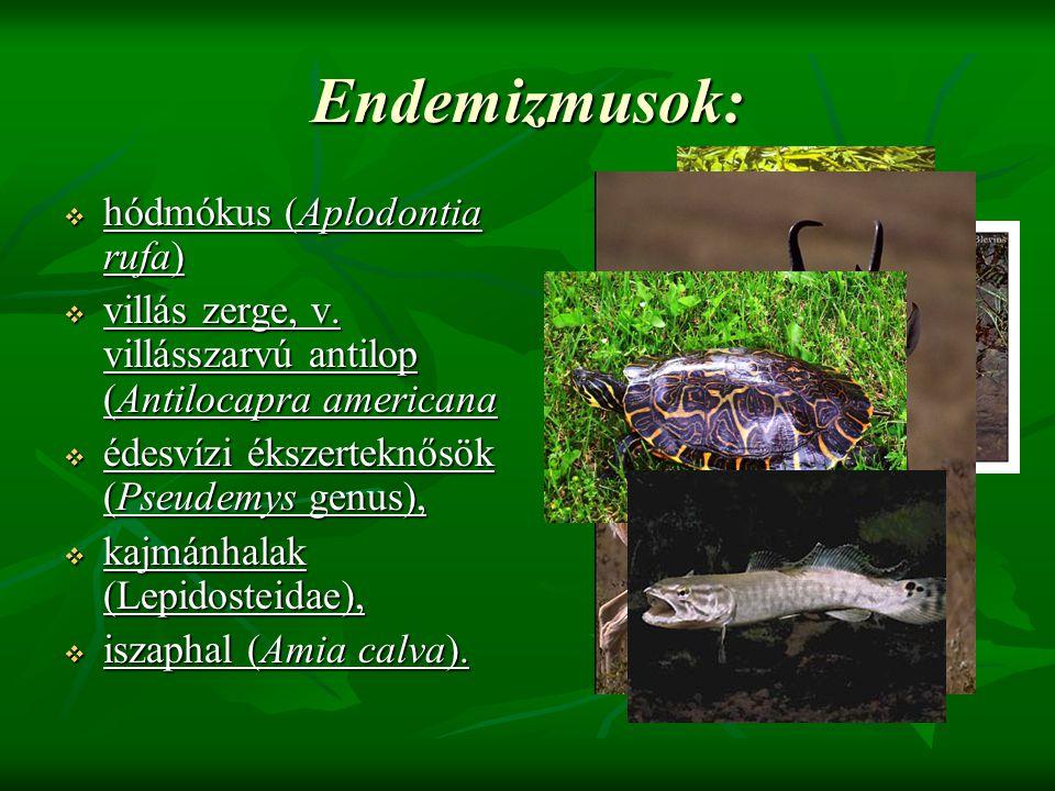 Endemizmusok:  hódmókus (Aplodontia rufa)  villás zerge, v. villásszarvú antilop (Antilocapra americana  édesvízi ékszerteknősök (Pseudemys genus),