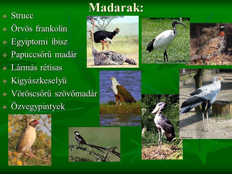 Madarak:  Strucc  Örvös frankolin  Egyiptomi íbisz  Papuccsőrű madár  Lármás rétisas  Kígyászkeselyű  Vöröscsőrű szövőmadár  Özvegypintyek