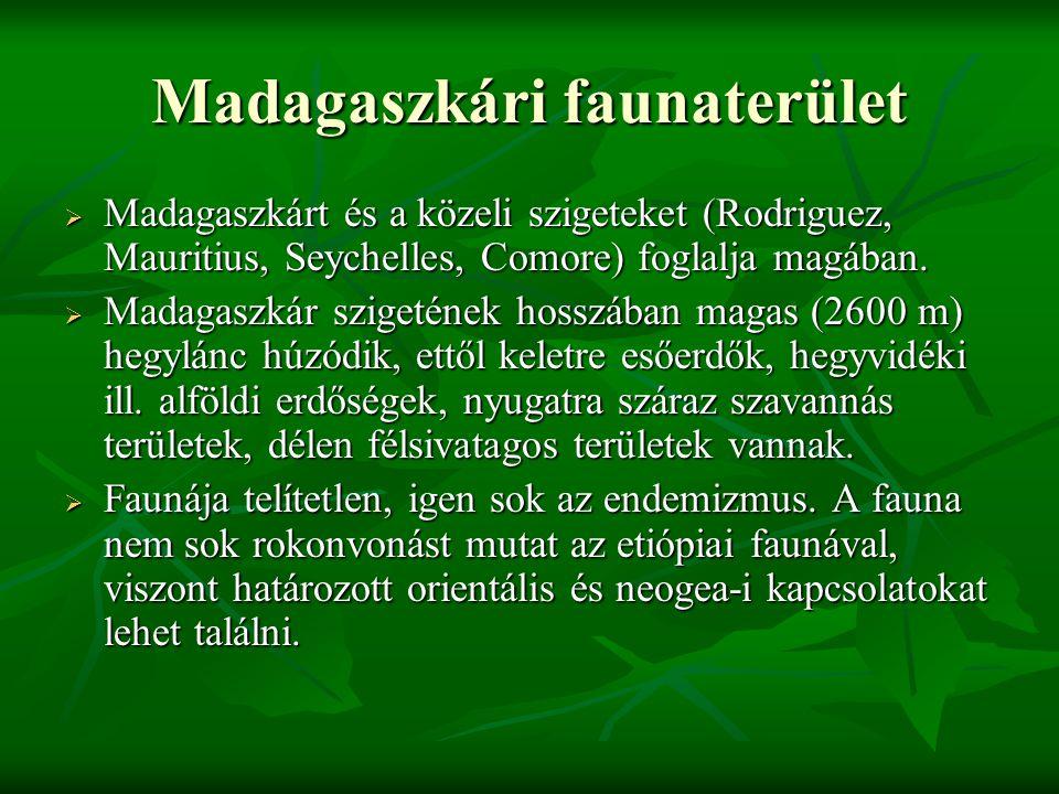 Madagaszkári faunaterület  Madagaszkárt és a közeli szigeteket (Rodriguez, Mauritius, Seychelles, Comore) foglalja magában.  Madagaszkár szigetének