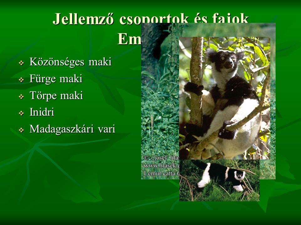 Jellemző csoportok és fajok Emlősők:  Közönséges maki  Fürge maki  Törpe maki  Inidri  Madagaszkári vari