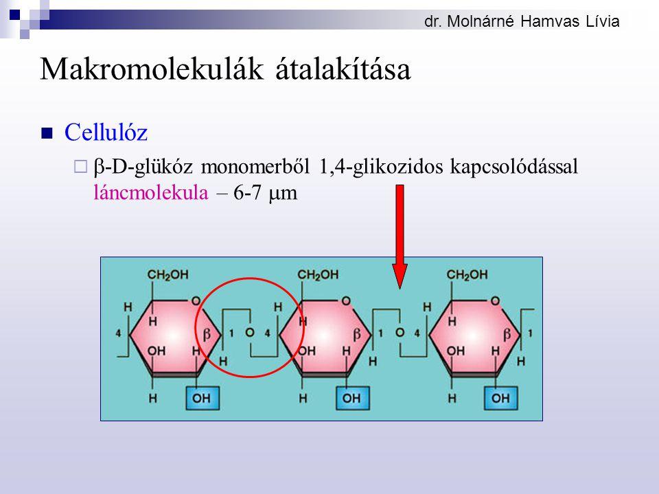 dr. Molnárné Hamvas Lívia Makromolekulák átalakítása Cellulóz   -D-glükóz monomerből 1,4-glikozidos kapcsolódással láncmolekula – 6-7  m
