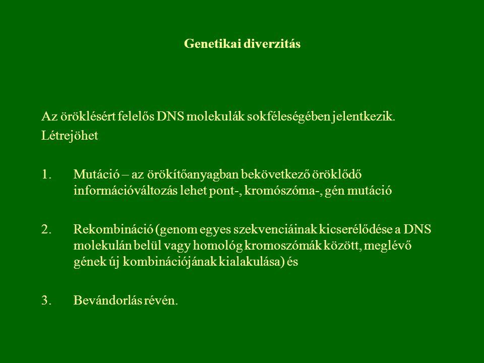 Genetikai diverzitás Az öröklésért felelős DNS molekulák sokféleségében jelentkezik. Létrejöhet 1.Mutáció – az örökítőanyagban bekövetkező öröklődő in