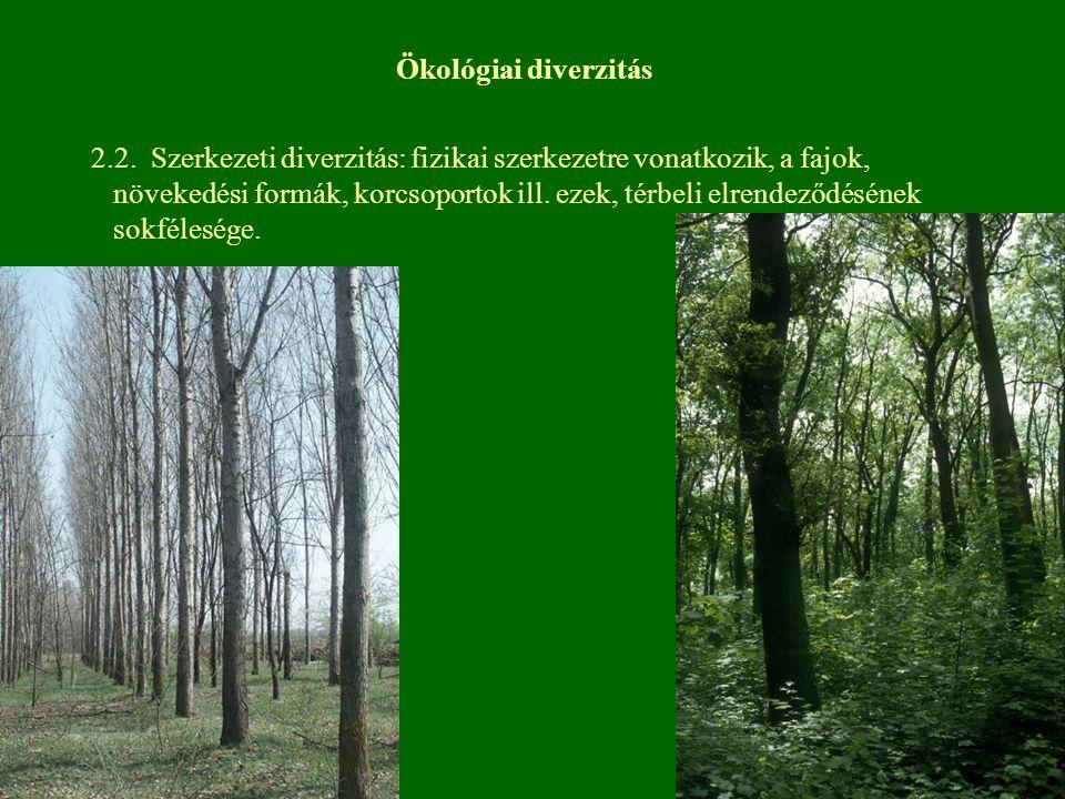 2.2. Szerkezeti diverzitás: fizikai szerkezetre vonatkozik, a fajok, növekedési formák, korcsoportok ill. ezek, térbeli elrendeződésének sokfélesége.