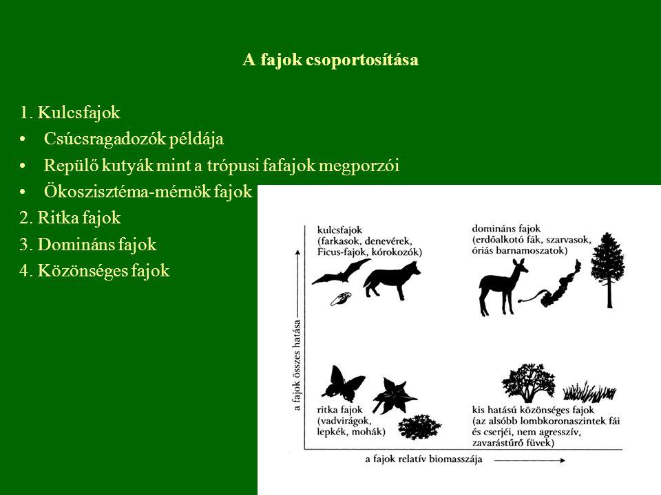 A fajok csoportosítása 1. Kulcsfajok Csúcsragadozók példája Repülő kutyák mint a trópusi fafajok megporzói Ökoszisztéma-mérnök fajok 2. Ritka fajok 3.
