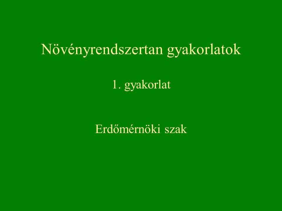 Növényrendszertan gyakorlatok 1. gyakorlat Erdőmérnöki szak