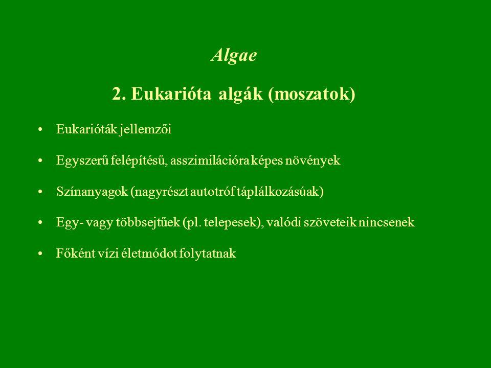 Algae 2.