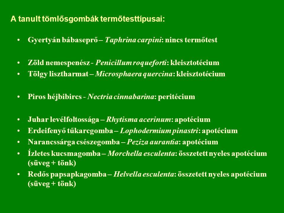 A tanult tömlősgombák termőtesttípusai: Gyertyán bábaseprő – Taphrina carpini: nincs termőtest Zöld nemespenész - Penicillum roqueforti: kleisztotécium Tölgy lisztharmat – Microsphaera quercina: kleisztotécium Piros héjbibircs - Nectria cinnabarina: peritécium Juhar levélfoltossága – Rhytisma acerinum: apotécium Erdeifenyő tűkarcgomba – Lophodermium pinastri: apotécium Narancssárga csészegomba – Peziza aurantia: apotécium Ízletes kucsmagomba – Morchella esculenta: összetett nyeles apotécium (süveg + tönk) Redős papsapkagomba – Helvella esculenta: összetett nyeles apotécium (süveg + tönk)