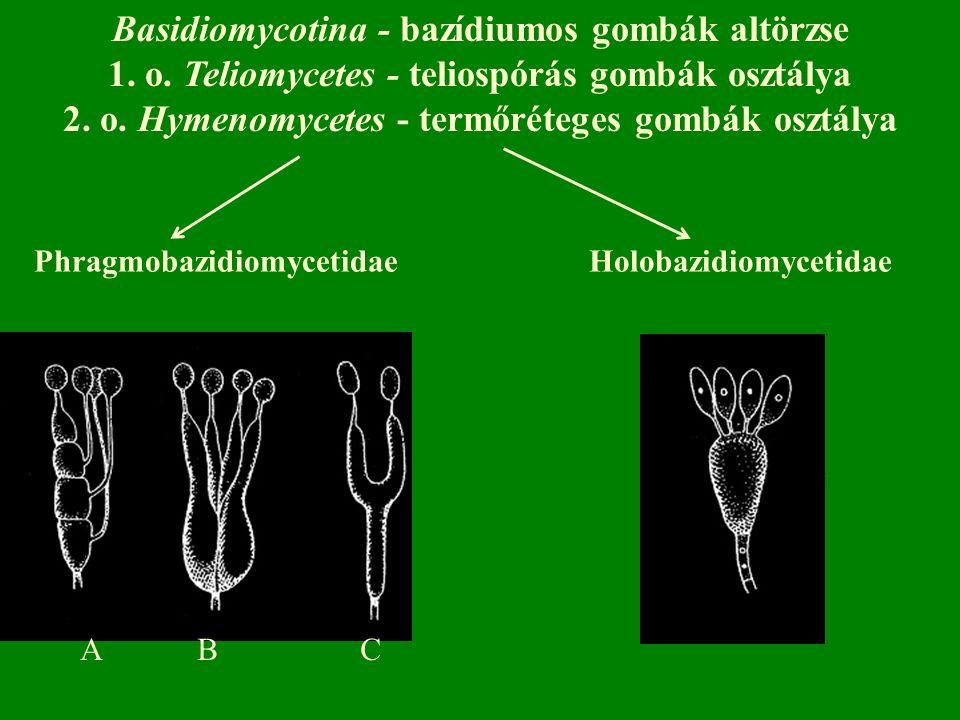 PhragmobazidiomycetidaeHolobazidiomycetidae A B C Basidiomycotina - bazídiumos gombák altörzse 1.