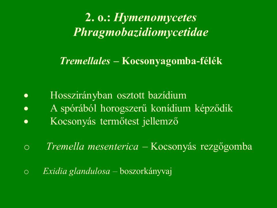  Hosszirányban osztott bazídium  A spórából horogszerű konídium képződik  Kocsonyás termőtest jellemző o Tremella mesenterica – Kocsonyás rezgőgomba o Exidia glandulosa – boszorkányvaj 2.