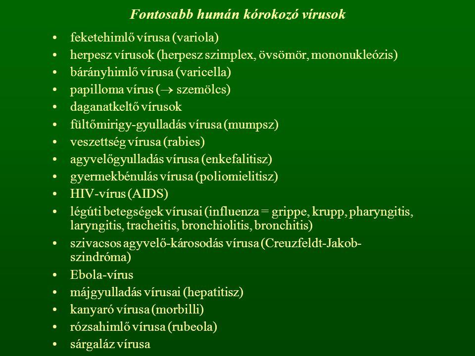 Fontosabb humán kórokozó vírusok feketehimlő vírusa (variola) herpesz vírusok (herpesz szimplex, övsömör, mononukleózis) bárányhimlő vírusa (varicella) papilloma vírus (  szemölcs) daganatkeltő vírusok fültőmirigy-gyulladás vírusa (mumpsz) veszettség vírusa (rabies) agyvelőgyulladás vírusa (enkefalitisz) gyermekbénulás vírusa (poliomielitisz) HIV-vírus (AIDS) légúti betegségek vírusai (influenza = grippe, krupp, pharyngitis, laryngitis, tracheitis, bronchiolitis, bronchitis) szivacsos agyvelő-károsodás vírusa (Creuzfeldt-Jakob- szindróma) Ebola-vírus májgyulladás vírusai (hepatitisz) kanyaró vírusa (morbilli) rózsahimlő vírusa (rubeola) sárgaláz vírusa