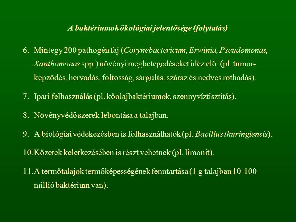 A baktériumok ökológiai jelentősége (folytatás) 6.Mintegy 200 pathogén faj (Corynebactericum, Erwinia, Pseudomonas, Xanthomonas spp.) növényi megbetegedéseket idéz elő, (pl.