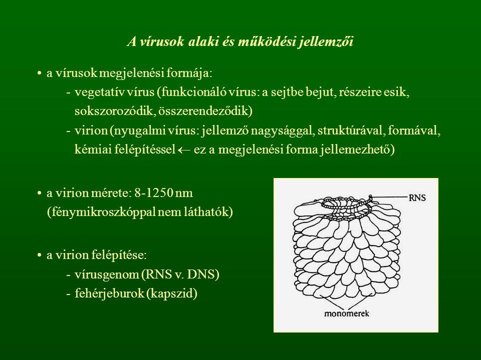 A vírusok alaki és működési jellemzői a vírusok megjelenési formája: -vegetatív vírus (funkcionáló vírus: a sejtbe bejut, részeire esik, sokszorozódik, összerendeződik) -virion (nyugalmi vírus: jellemző nagysággal, struktúrával, formával, kémiai felépítéssel  ez a megjelenési forma jellemezhető) a virion mérete: 8-1250 nm (fénymikroszkóppal nem láthatók) a virion felépítése: -vírusgenom (RNS v.